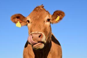 Cultura de consumo de la leche