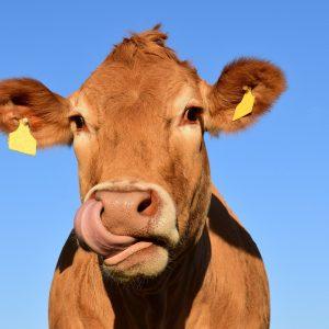 China y los lácteos: amor, odio y una oportunidad de inversión perfecta para España
