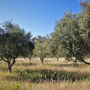 El sector olivarero español